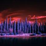 Die Natur bei Nacht erleben